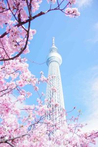 YourCryptoMind tokyo-skytree-1-200x300 Guide to Tokyo – Cointelegraph Magazine
